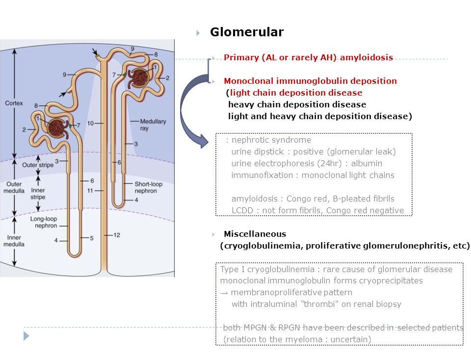 4  Glomerular ...