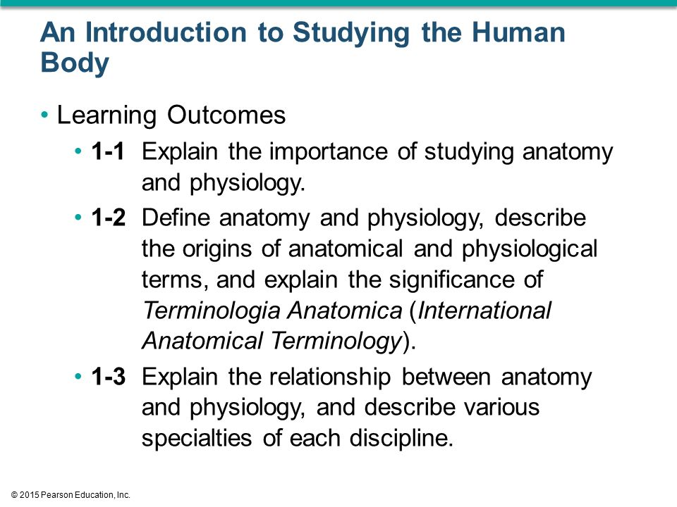 Perfect Why Is It Important To Study Anatomy And Physiology Together ...