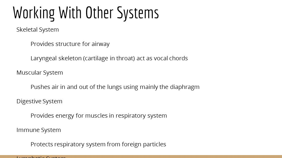 The Respiratory System Grace William Iris Miles Period Ppt Download