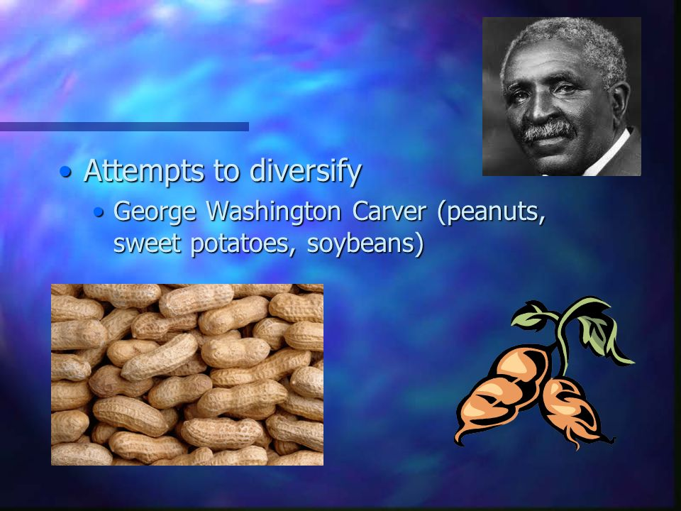 Attempts to diversifyAttempts to diversify George Washington Carver (peanuts, sweet potatoes, soybeans)George Washington Carver (peanuts, sweet potatoes, soybeans)