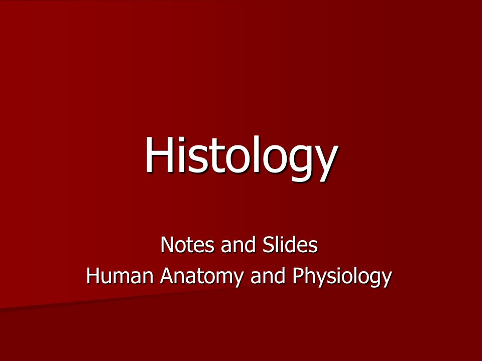 Histology Notes and Slides Human Anatomy and Physiology. - ppt download