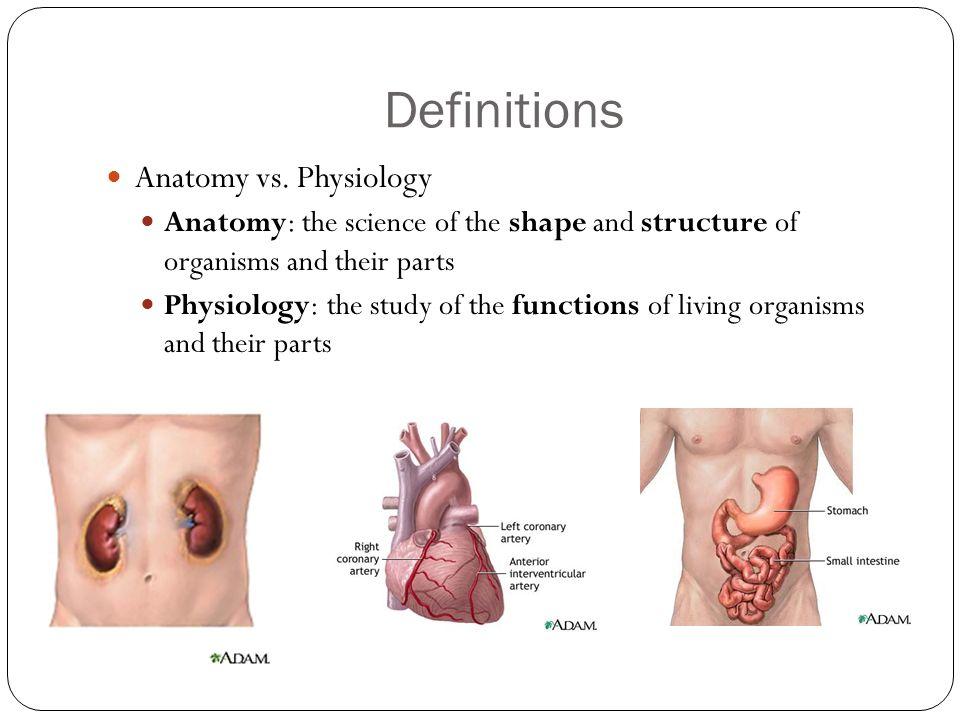 human anatomy definition