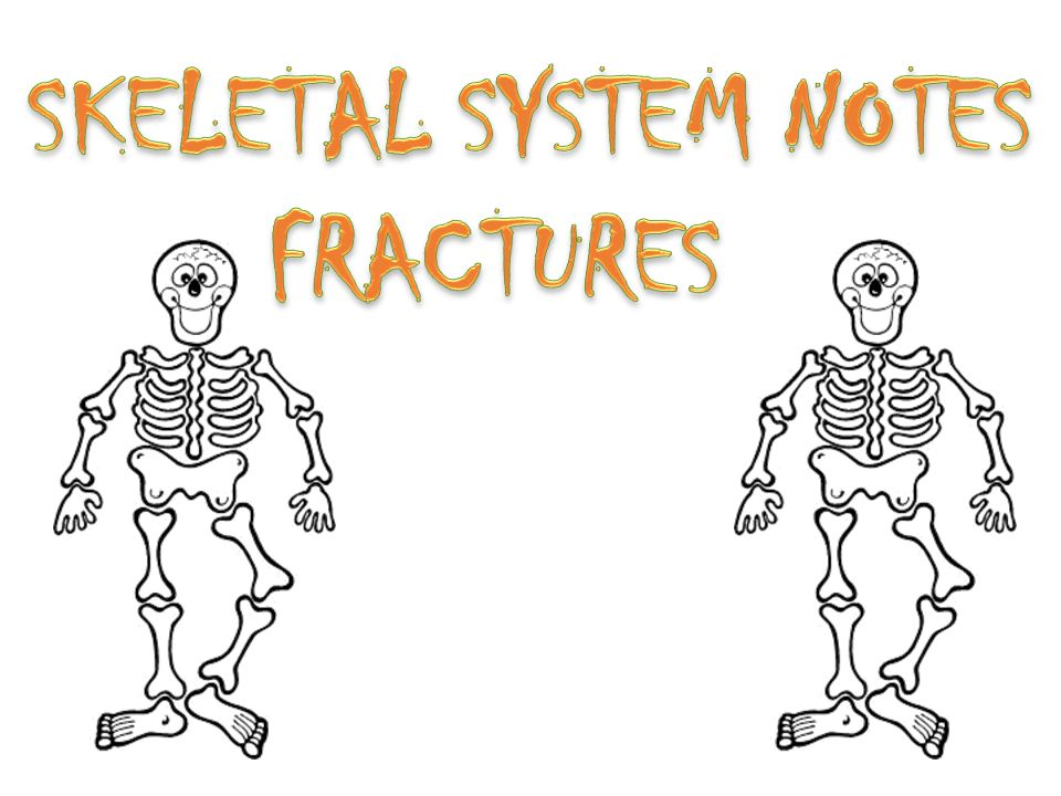 What Are The Parts Of The Skeletal System The Parts Of The Skeletal