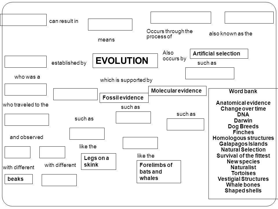 Concept Map About Evolution.Evolution Concept Map Evolution Occurs Through The Process Of