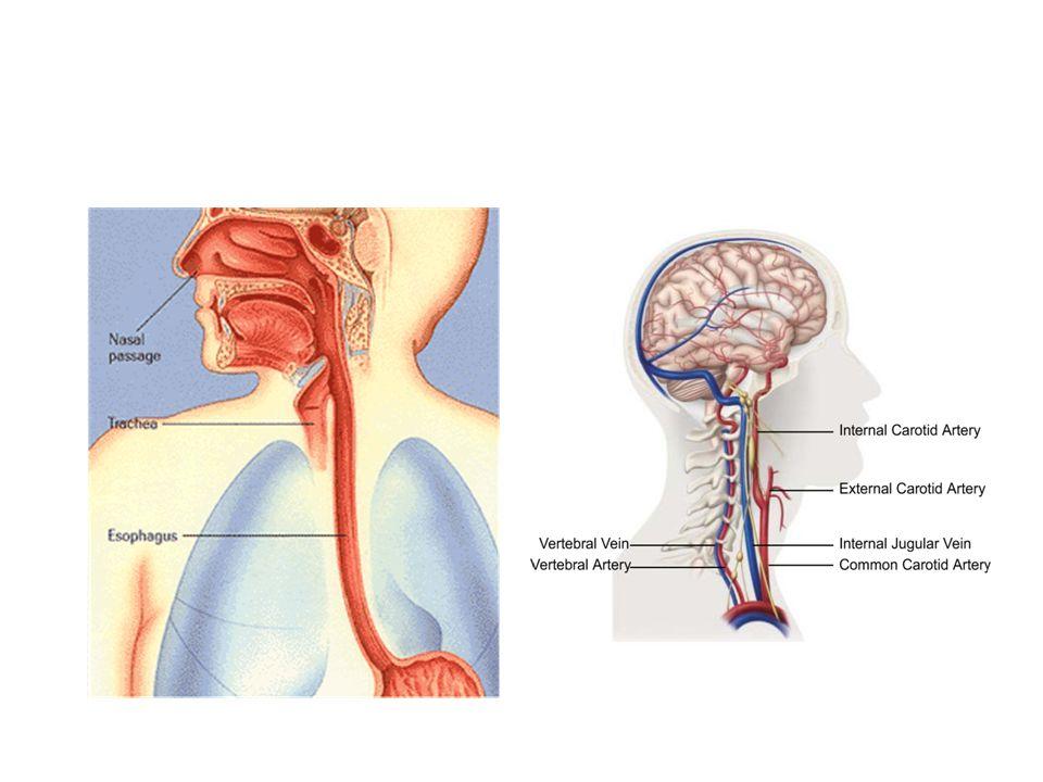 Overview of skull base surgery John R. Ouma MB ChB (Makerere), MMed ...