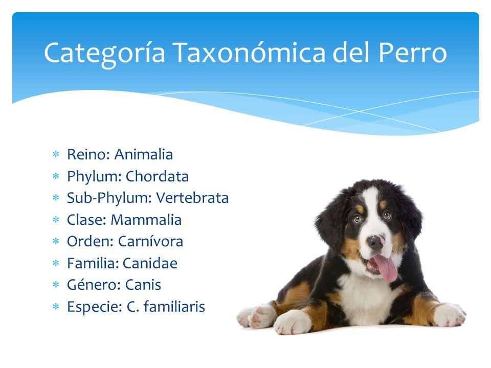 TAXONOMIA DEL PERRO EBOOK
