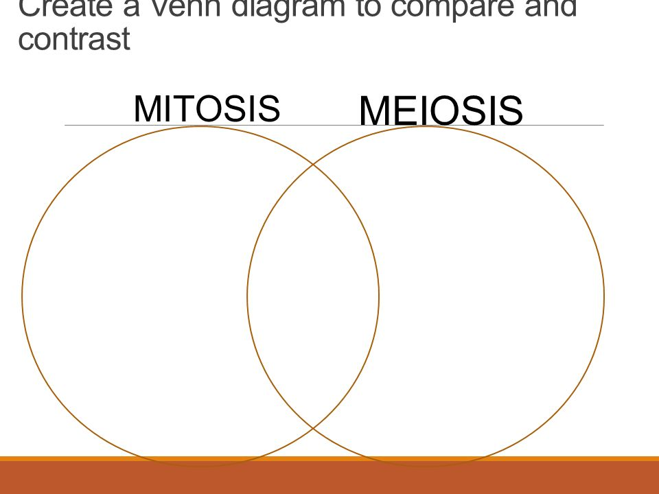 Review 1 What Is Mitosis 2 What Are The Stages Of Mitosis