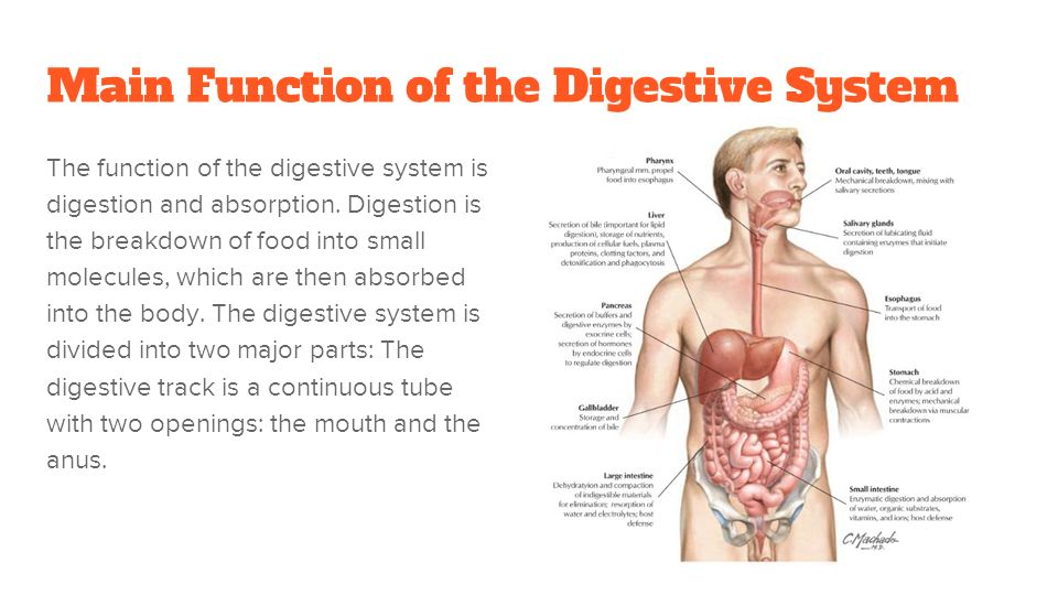 Digestive System Alicia C Binali Cole And Tom Ppt Download