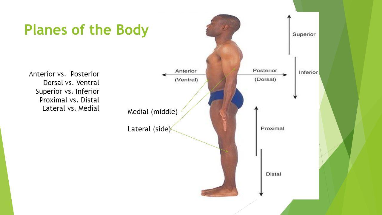 Language of Anatomy Wakefield Planes of the Body (aka – Frontal ...
