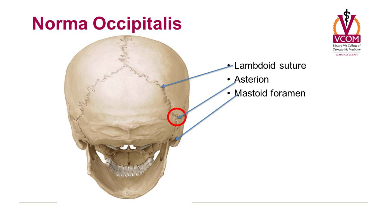 LAB PRELUDE BLOCK 3 – ANATOMY OF SKULL. Skull Views Superior – Norma ...