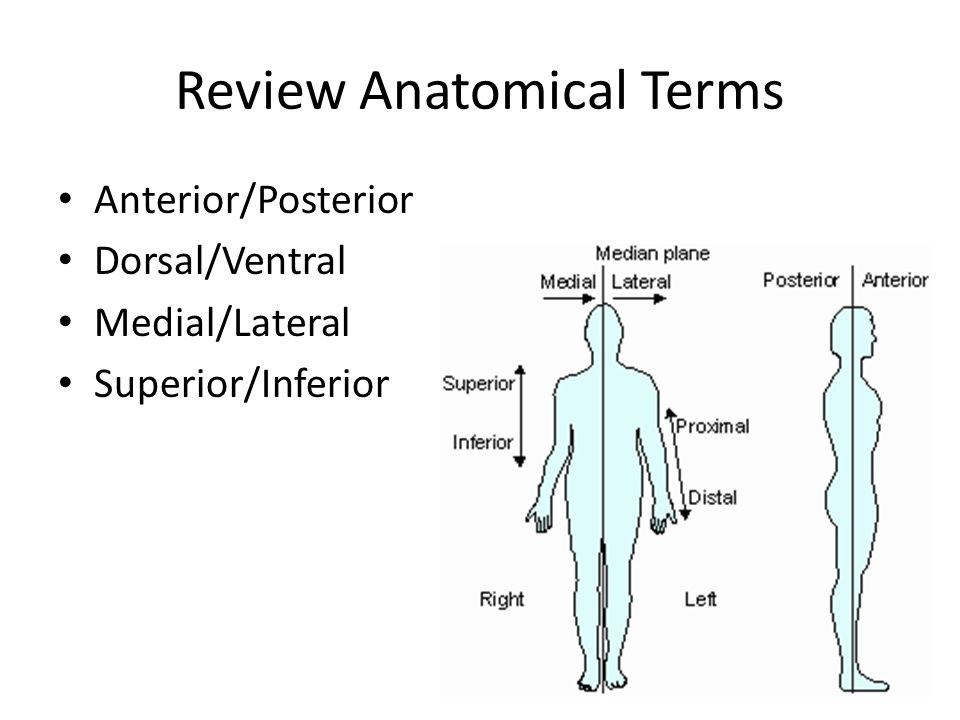 The Skeletal System Focus on the Skull. Review Anatomical Terms ...