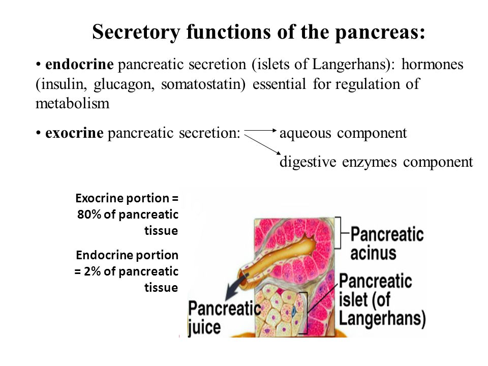 Secretory Functions Of The Pancreas Endocrine Pancreatic Secretion