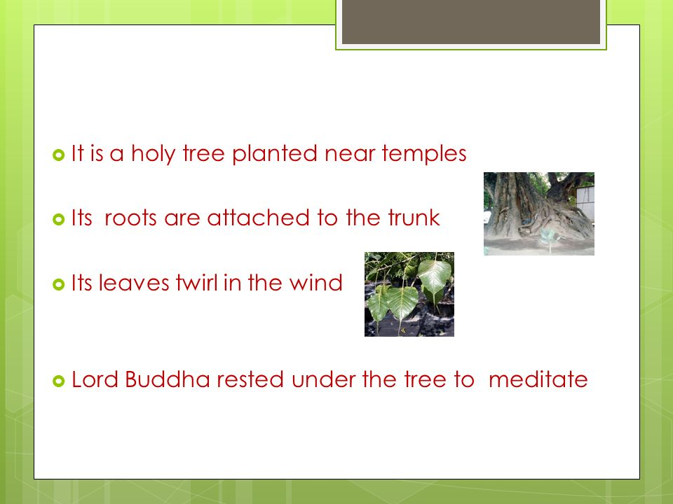 Common Indian trees and their use A quiz based on common trees in