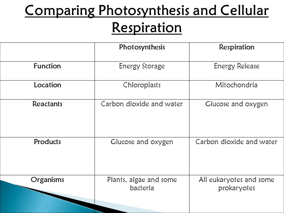 Photosynthesis Cellular Respiration And Fermentation Ppt
