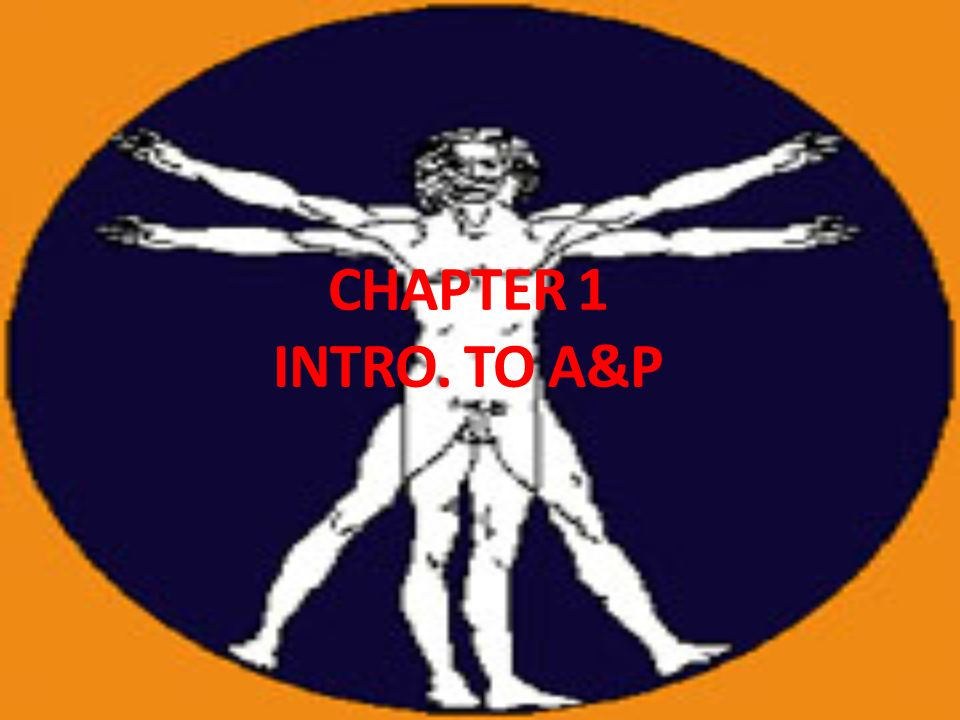 CHAPTER 1 INTRO. TO A&P. Intro to A&P Anatomy – Physiology – deals ...