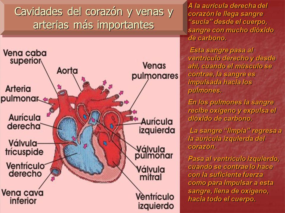 corazon lleno de sangre