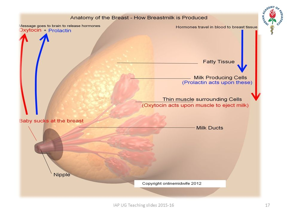 Breast tenderness in first trimester