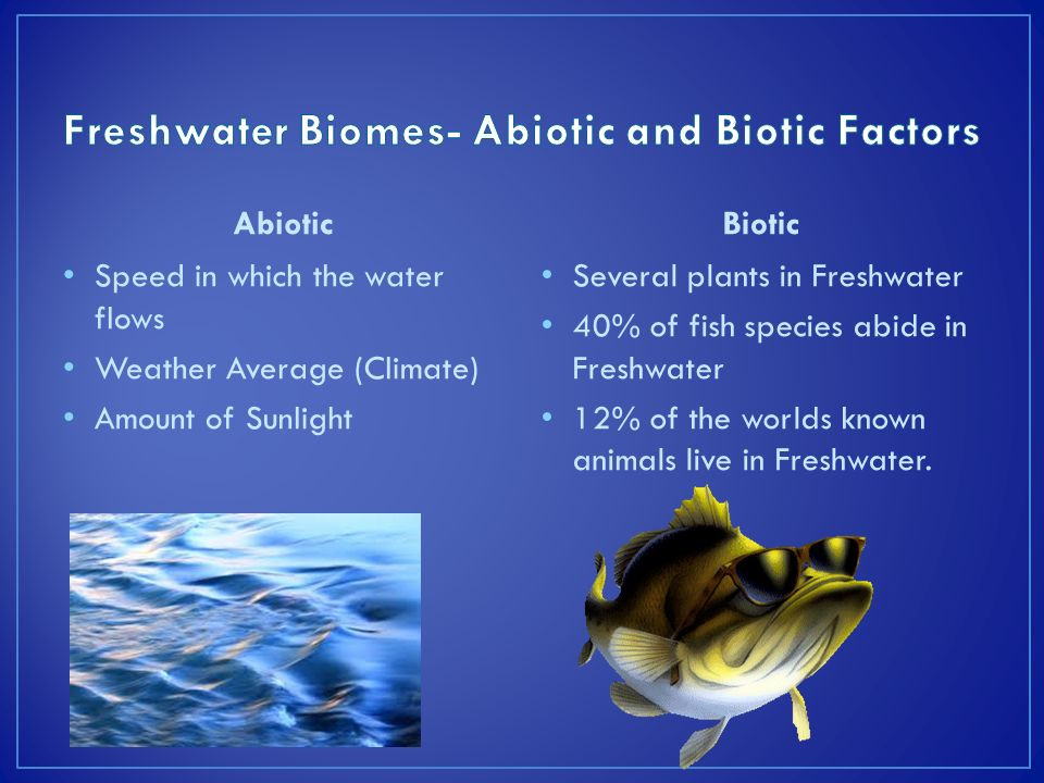 the characteristics of the streams lakes ponds and swamps types of freshwater biomes Freshwater biomes have 05 or less ppt (lakes, ponds, rivers) 101 aquatic biomes brackish water is more salty that fresh but less than the ocean - (anywhere freshwater meets with sea water - marshes, deltas, estuaries .