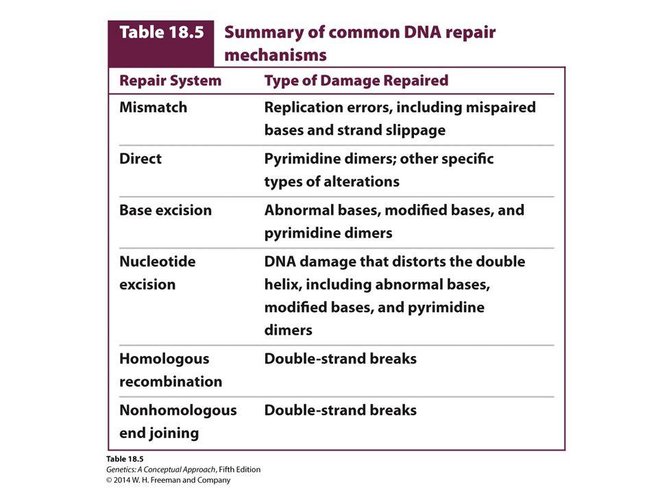 GENETICS A Conceptual Approach FIFTH EDITION GENETICS A