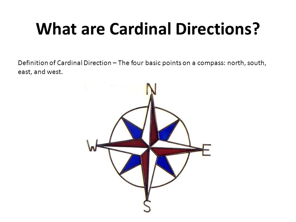 Warm Up 8 1114 With A Partner Discuss The Definitions Of Cardinal
