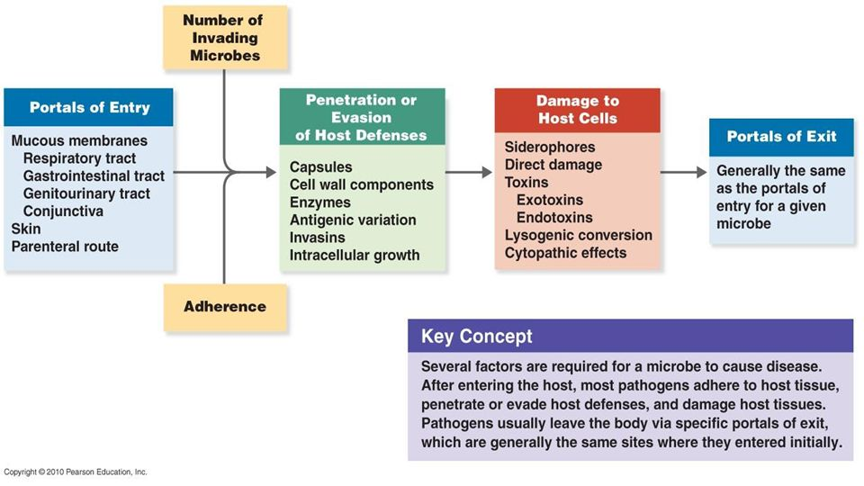 Penetration Of Host Defenses Concept Map.Bacterial Cell Wall Morphology Mechanism Of Pathogenicity Brandy