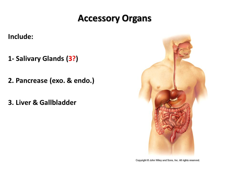 Histology of The Accessory Organs of The Digestive System. - ppt ...
