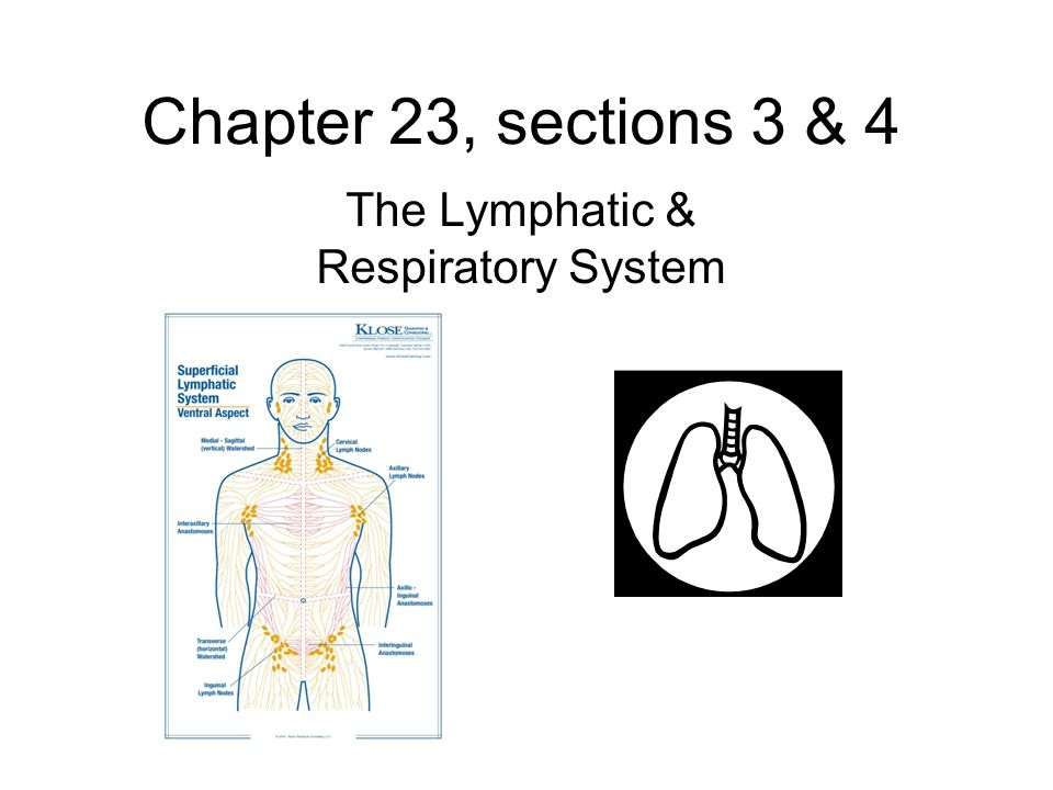 Chapter 23 sections 3 4 the lymphatic respiratory system ppt 1 chapter 23 sections 3 4 the lymphatic respiratory system ccuart Choice Image