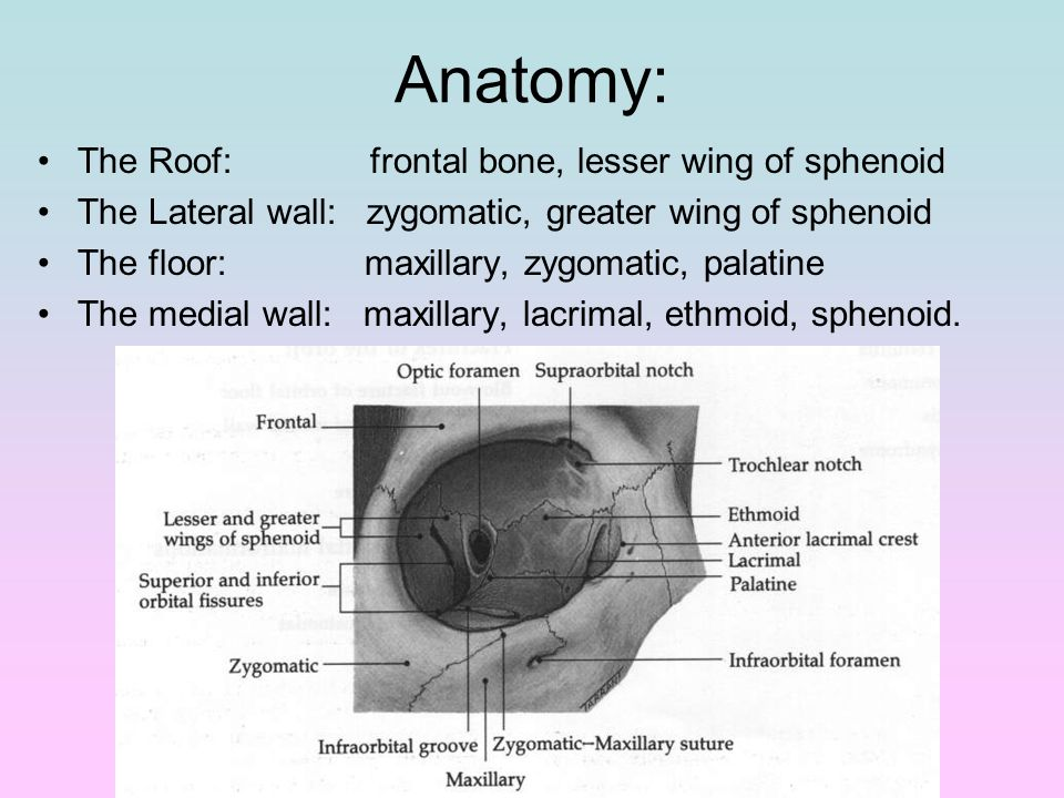 The Orbit. Anatomy: The Roof: frontal bone, lesser wing of sphenoid ...