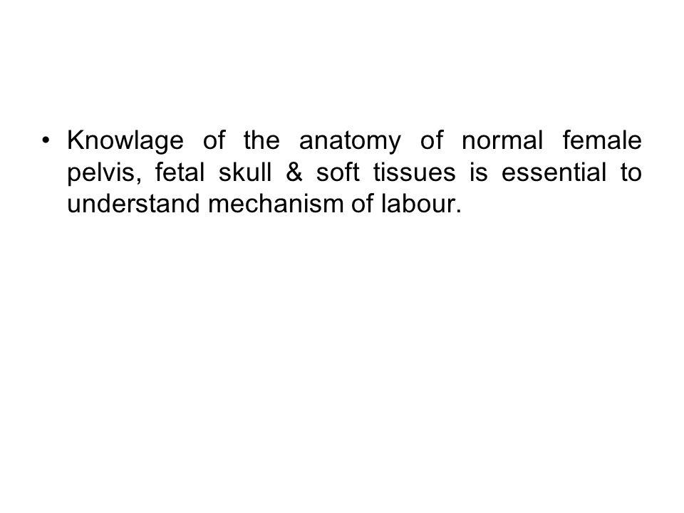 Anatomy Of Normal Pelvis Fetal Skull Knowlage Of The Anatomy Of