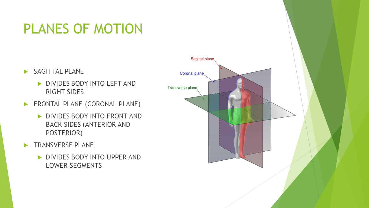 Planes Of Motion Directional Movement Anatomical Terms Ppt Download