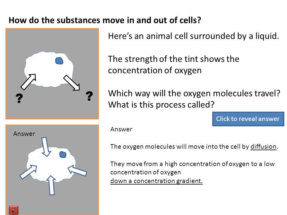 B3 resources heres a typical animal cell what are the main how do the substances move in and out of cells heres an animal cell surrounded ccuart Choice Image
