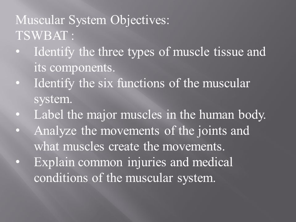 Muscular System Objectives Tswbat Identify The Three Types Of