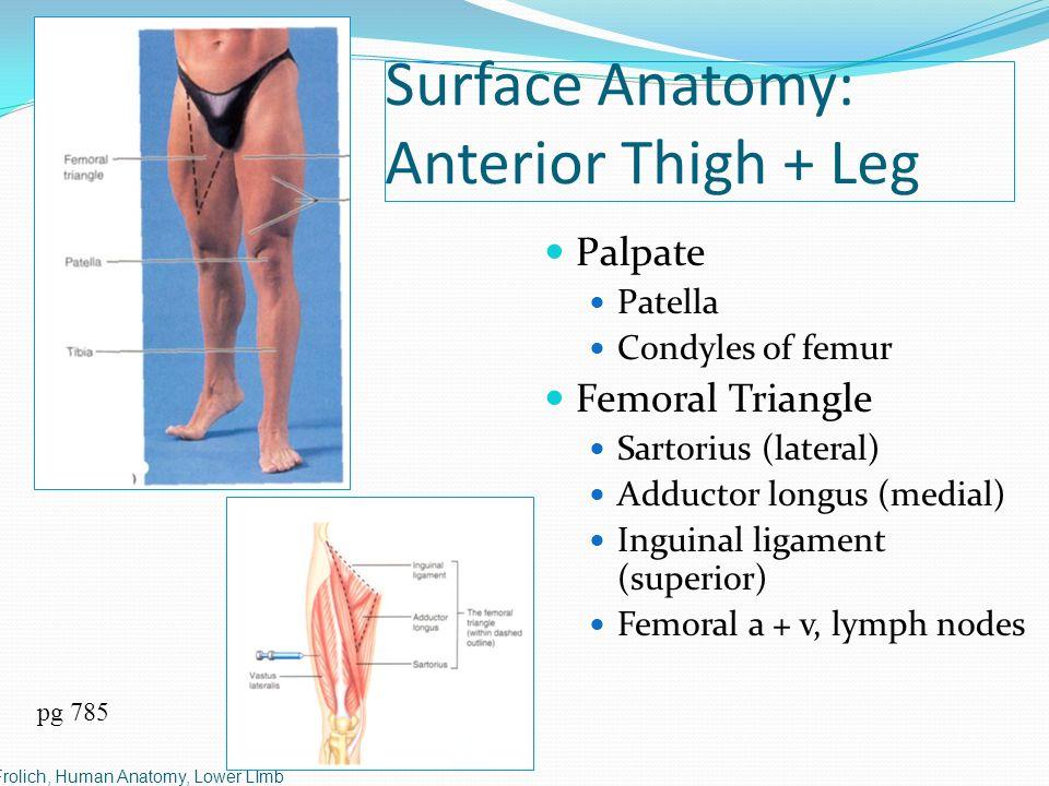 Dr S Nishan Silva Mbbs Frolich Human Anatomy Lower Limb