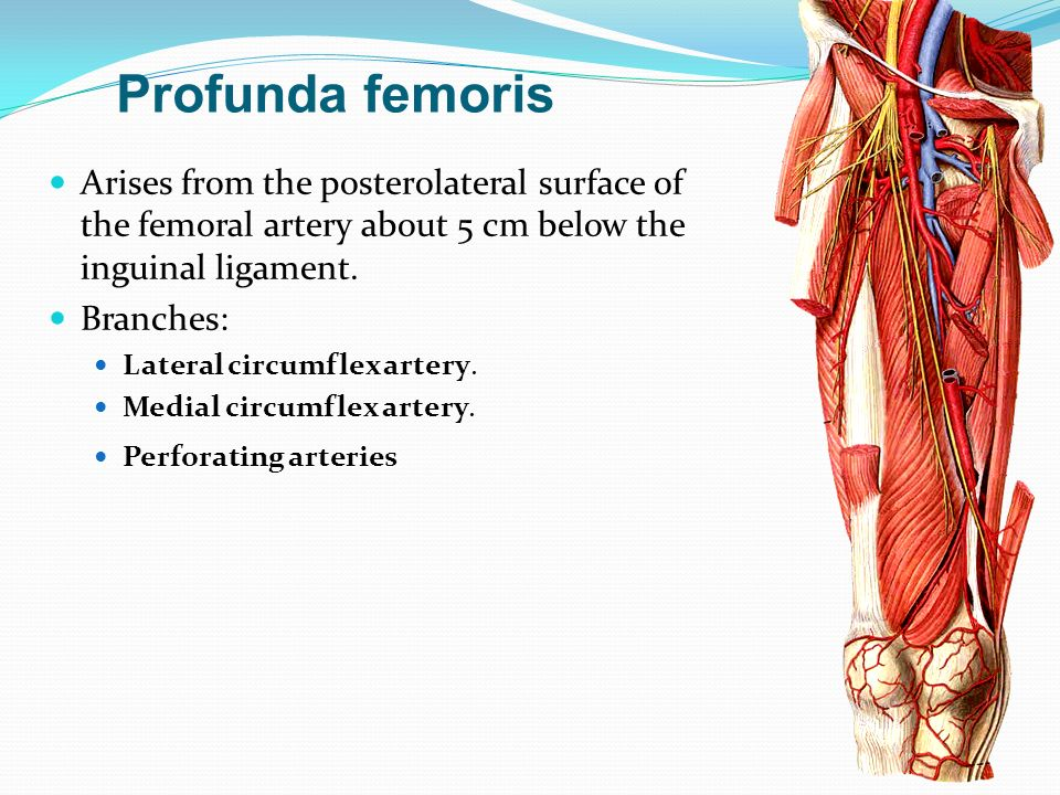 Dr. S. Nishan Silva (MBBS). Frolich, Human Anatomy, Lower LImb ...