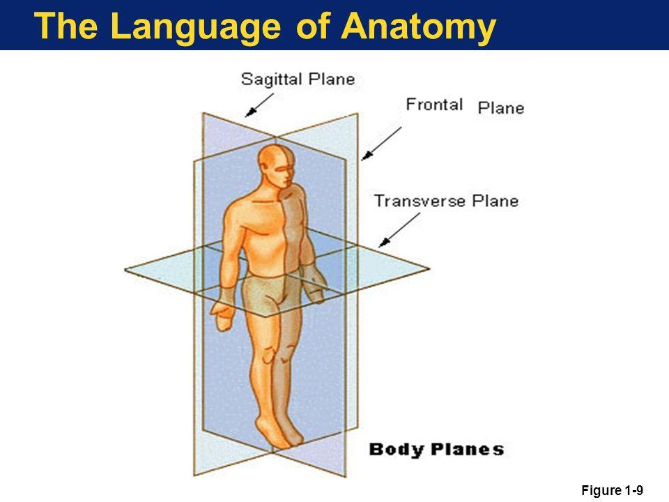 Language Of Anatomy Diagram - Auto Electrical Wiring Diagram •