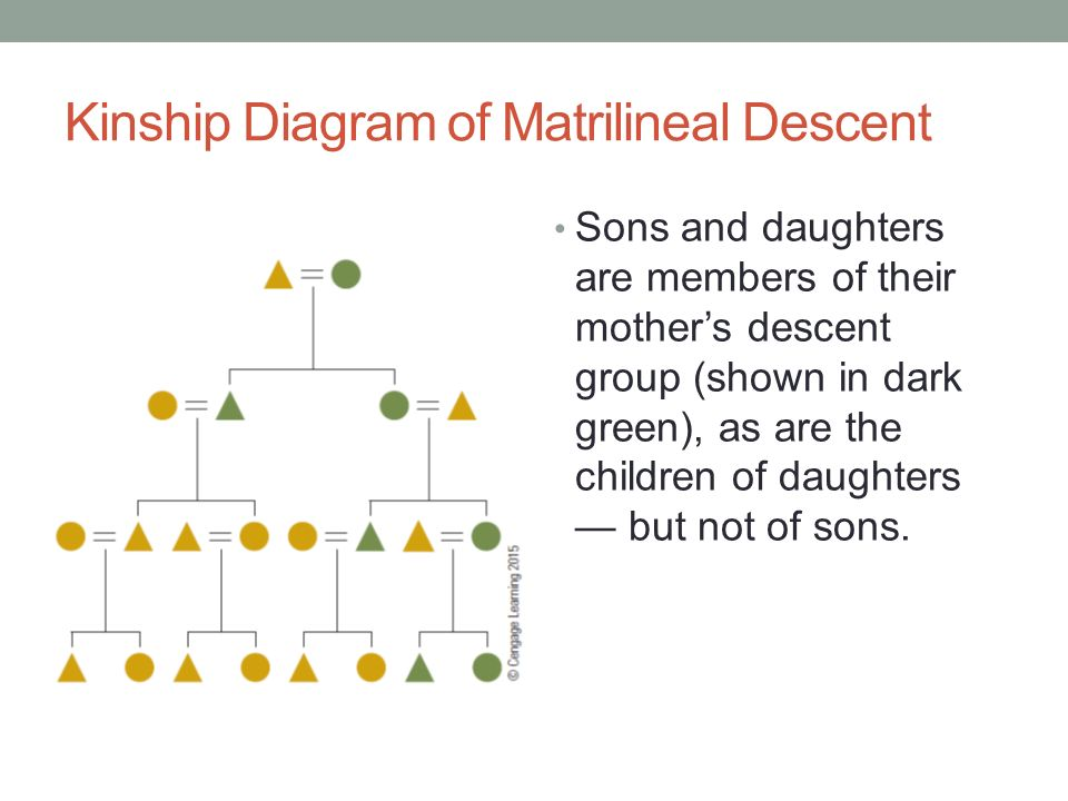 Kinship Descent Diagram Free Car Wiring Diagrams