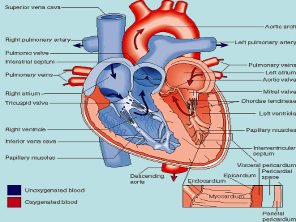 Drug acting on the Heart Heart failure. Lecture objectives At the ...