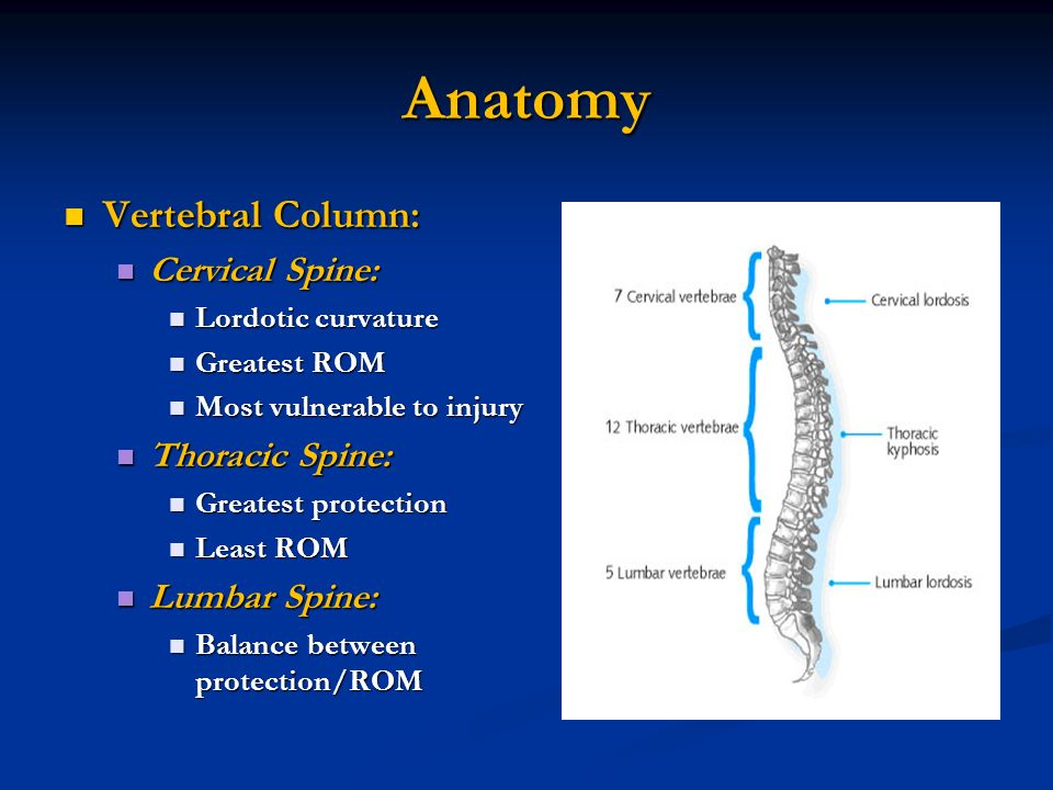 Thoracic and Lumbar Spine Anatomy Dr.S.Nizamudeen. - ppt download