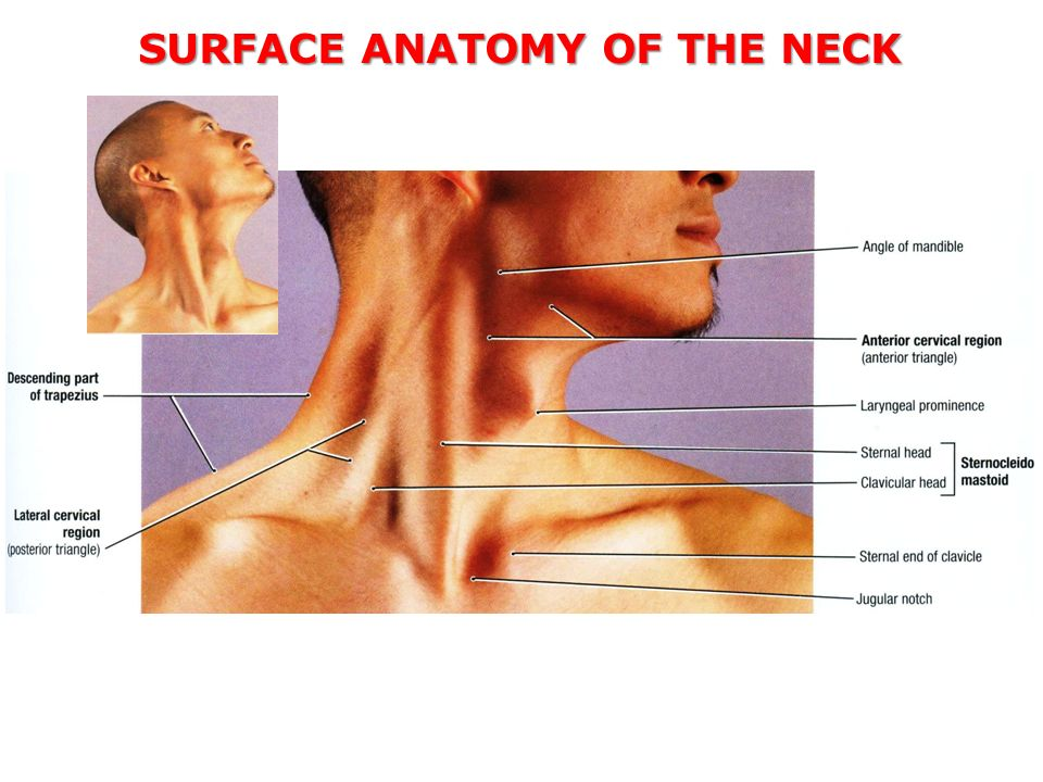 TRIANGLES OF THE NECK Khalid M. Khan Department of Anatomy Kuwait ...