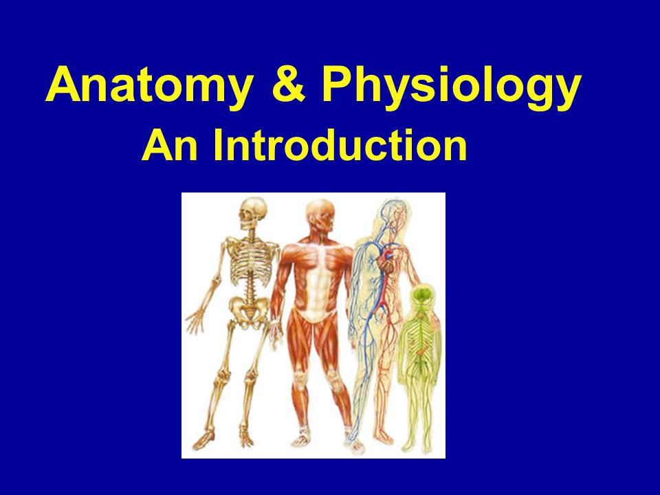 Anatomy & Physiology An Introduction.  Anatomy - The study of the ...