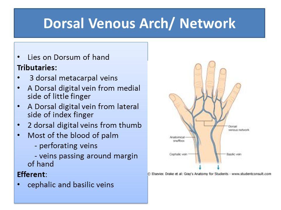 Venous and lymphatic drainage of Upper Limb Dr Anita Rani Professor ...