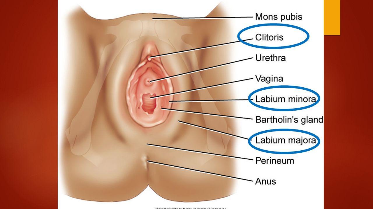 Danielle wylde nude pics