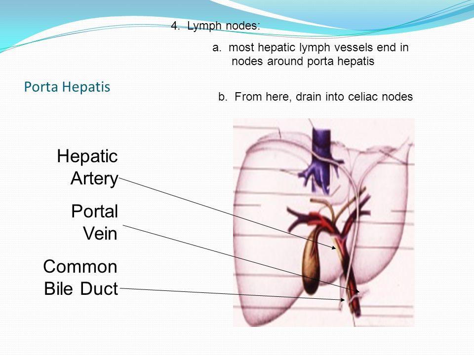 Porta Hepatis Diagram - Auto Wiring Diagram Today •