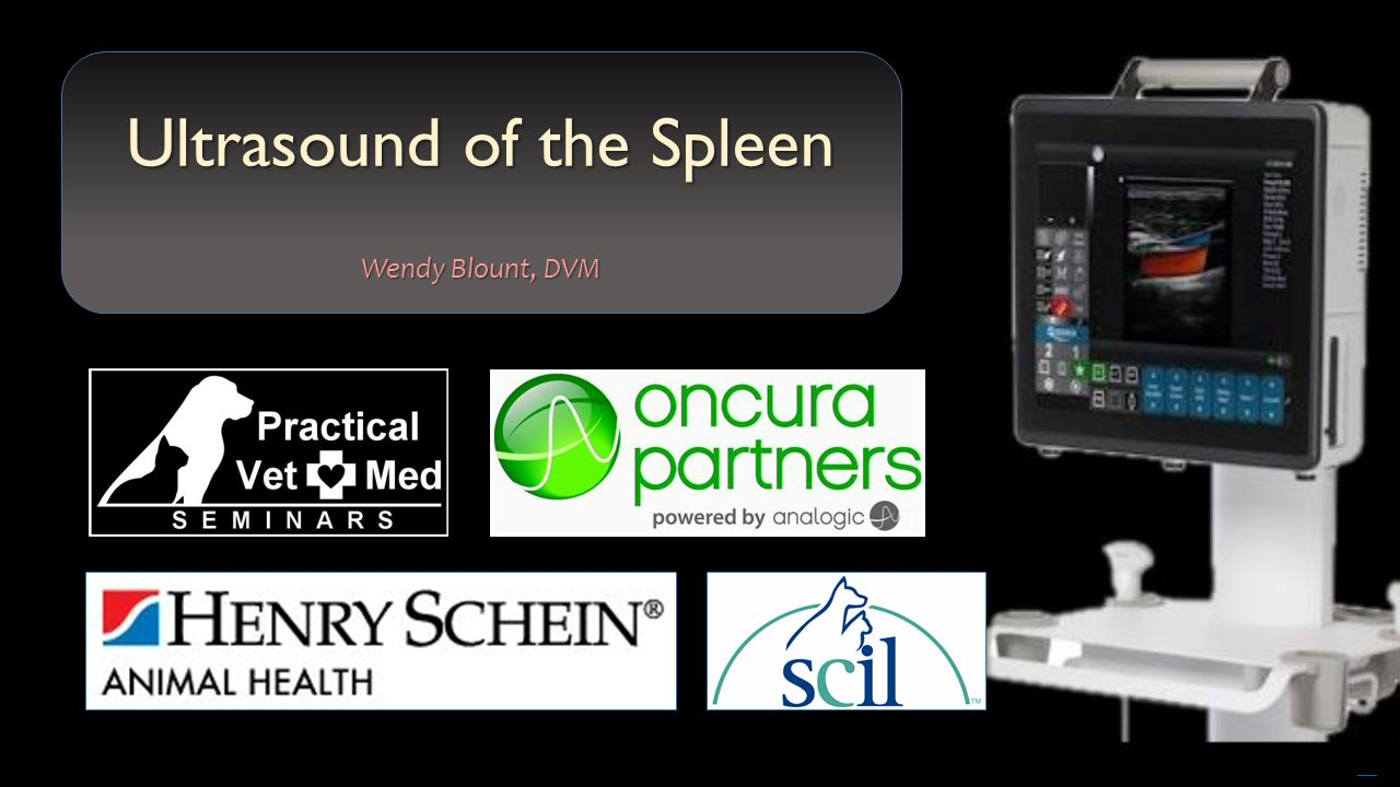 Free powerpoint templates ultrasound of the spleen wendy blount dvm 1 free powerpoint templates ultrasound of the spleen wendy blount dvm toneelgroepblik