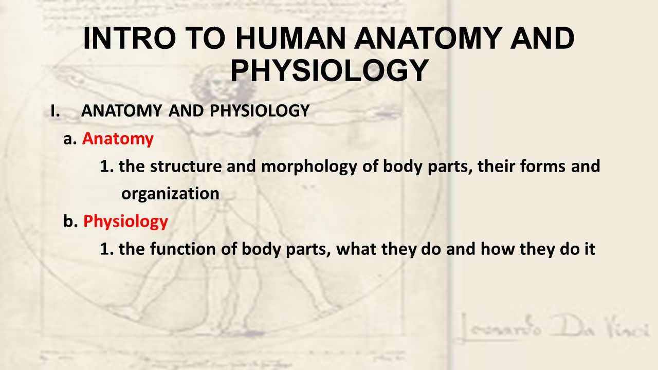 INTRO TO HUMAN ANATOMY AND PHYSIOLOGY I.ANATOMY AND PHYSIOLOGY a ...