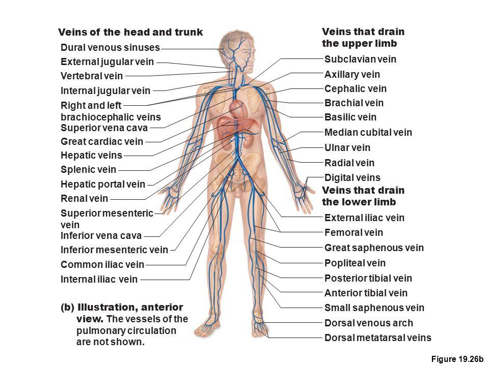 Lab Lecture #3 Circulatory system 5/11/10. Monitoring Circulatory ...