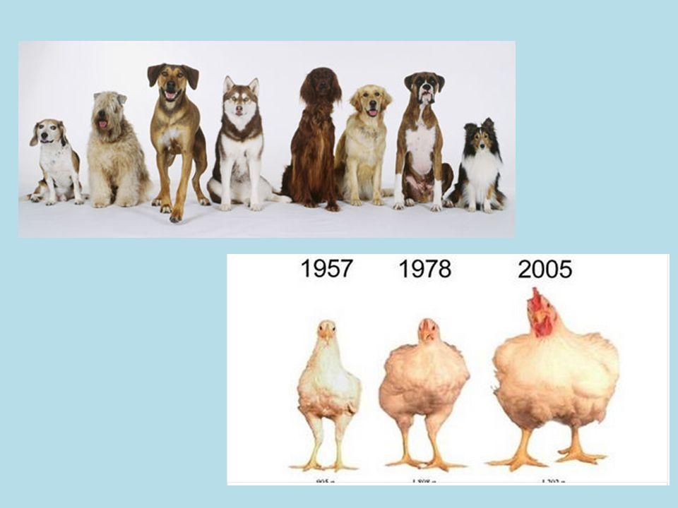 importance of animal breeding