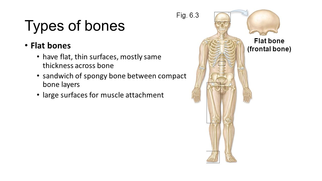End of Chapter 6 Types of Bones and Bone Markings And Chapter ppt ...