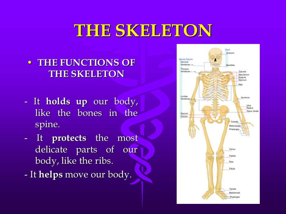 The Locomotor System Bones They Are The Hardest Part Of Our Body