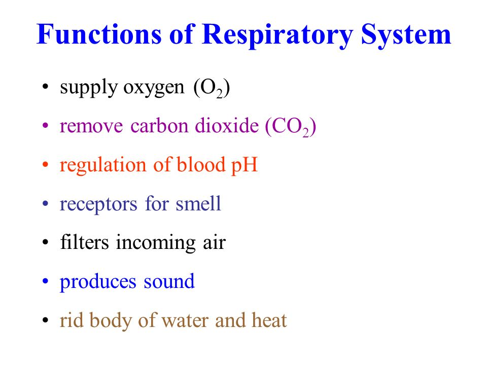 2 Functions of Respiratory System supply oxygen (O 2 ) remove carbon  dioxide (CO 2 ) regulation of blood pH receptors for smell filters incoming  air ...